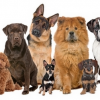Puppy Breed Selector Tool