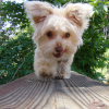 Guide to Choosing a Pet Sitter for Your Puppy