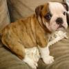 House Training a Puppy & Puppy Leash Training