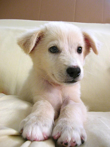 Clever Dog Names | LoveToKnow