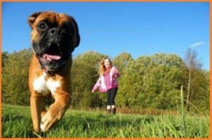 Dog-consantly-running-away